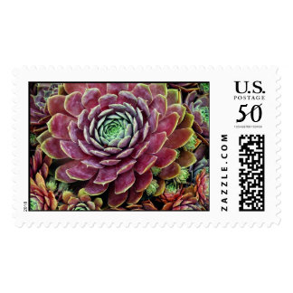 Hen And Chicks Postage