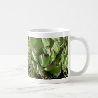 Hen and chicks (Sempervivum) Classic White Coffee Mug