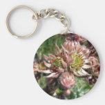 Hen and chicks (Sempervivum) flowers Key Chain