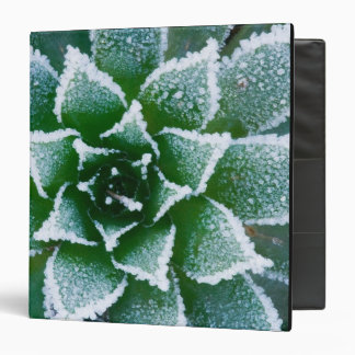 Hen & Chicks succulent with frost in the early Binder