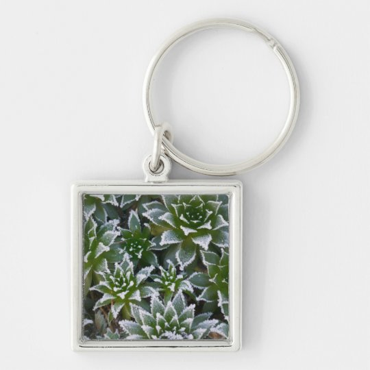 Hen & Chicks succulent with frost in the early Keychain