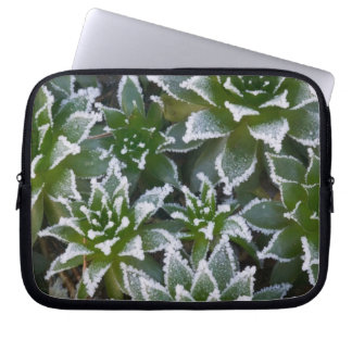 Hen & Chicks succulent with frost in the early Laptop Sleeve