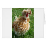 hen greeting cards