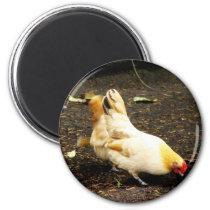 Hen Peck Magnet