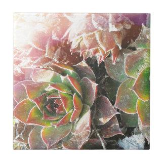 Hen snd Chick Plants, Succulents, Plant Photograph Ceramic Tile