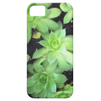Hens and Chicks iPhone 5 Cases