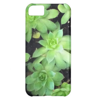 Hens and Chicks Case For iPhone 5C