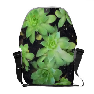Hens and Chicks Courier Bag
