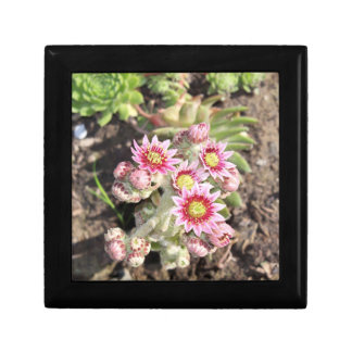 Hens and Chicks Flowers Gift Box