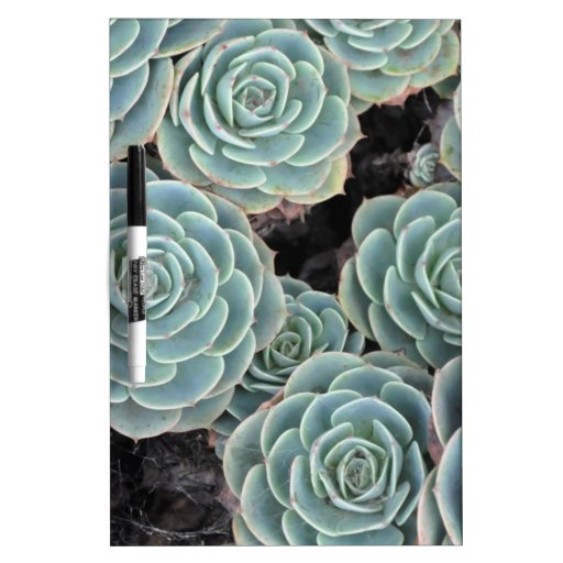 Hens and Chicks Plant Dry-Erase Boards