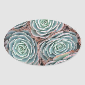 Hens and Chicks Plant Oval Sticker
