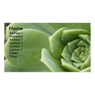 Hens and Chicks Plant Photo Business Card