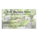 Hens And Chicks - Sempervivum Business Cards