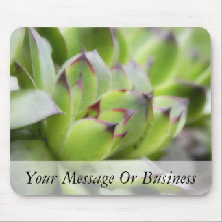 Hens And Chicks - Sempervivum Mouse Pad