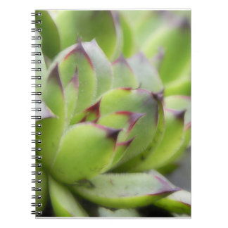 Hens And Chicks - Sempervivum Spiral Notebook