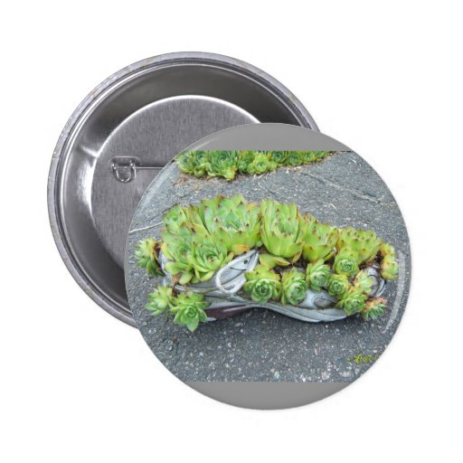 Hens & Chicks in Training (shoe) ~ button