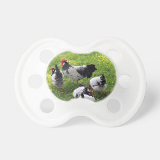 Hens Pecking in the Grass Pacifier