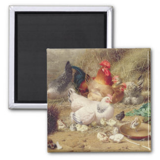 Hens roosting with their chickens refrigerator magnets