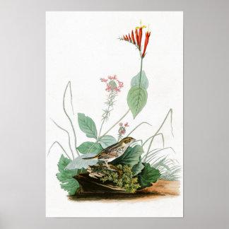 Henslow's Bunting John Audubon Birds of America Poster