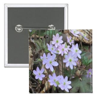 Hepatica Wildflower Plant