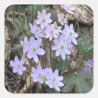 Hepatica Wildflower Plant Square Sticker
