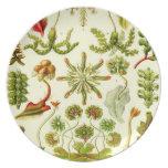 Hepáticas de Ernst Haeckel Platos Para Fiestas