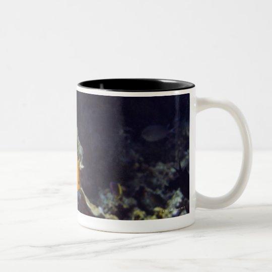 Herald's angelfish (Centropyge heraldi) swimming Two-Tone Coffee Mug
