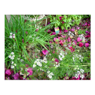 Herb collection chives photograph art postcard
