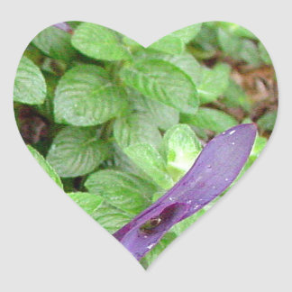 Herb collection Mint photograph art Heart Sticker