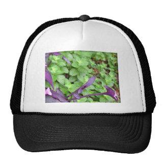 Herb collection Mint photograph art Trucker Hat