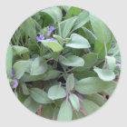Herb collection sage photograph art classic round sticker