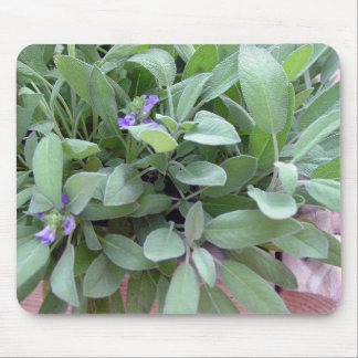 Herb collection sage photograph art mouse pad