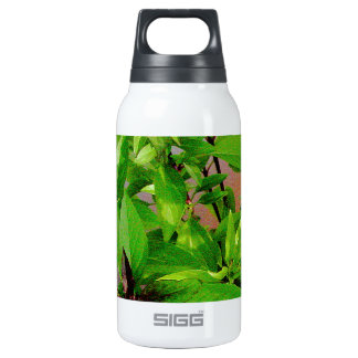 Herb collection Thai Basil photograph art Insulated Water Bottle