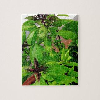 Herb collection Thai Basil photograph art Jigsaw Puzzle