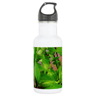 Herb collection Thai Basil photograph art Stainless Steel Water Bottle