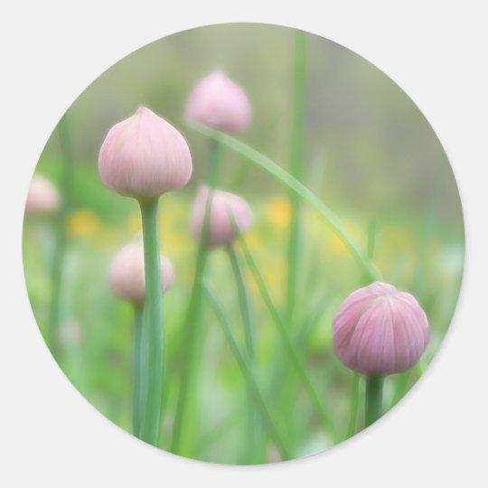 Herb Garden - Chive Buds Classic Round Sticker