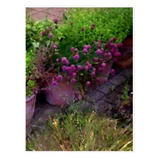 Herb Garden Post Card
