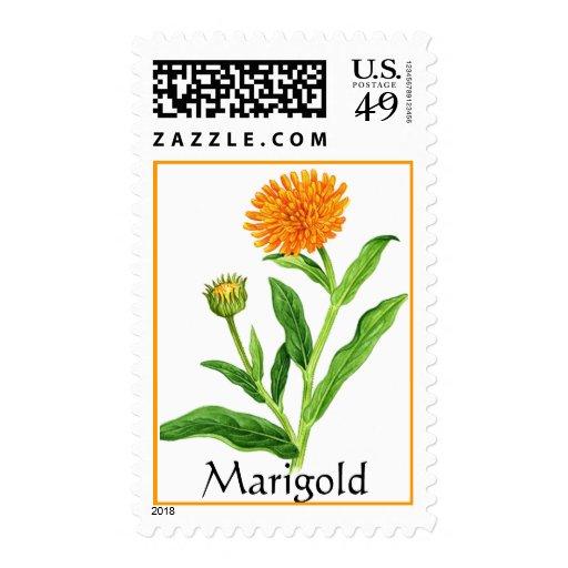 Herb Garden Series - Marigold Postage Stamp