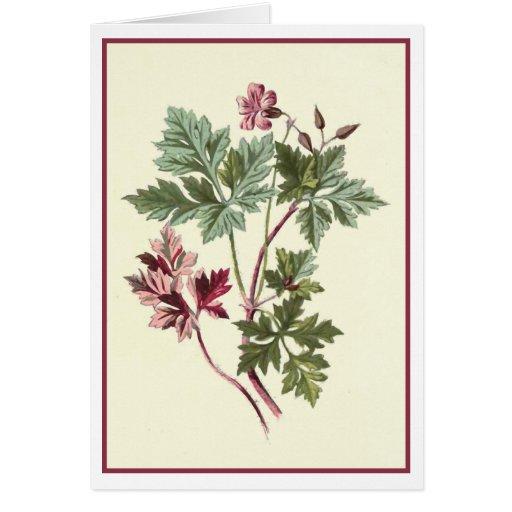 """Herb Robert"" Botanical Illustration Card"