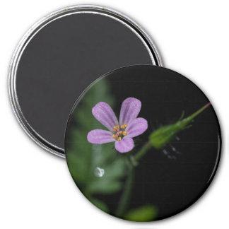 Herb Robert Geranium Pink Wildflower Magnet