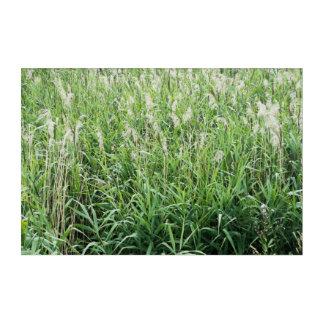 Herbage Acrylic Print