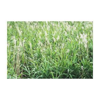 Herbage Canvas Print