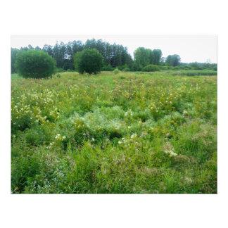 Herbage Photo Print