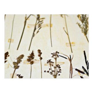 Herbal Specimens Postcard