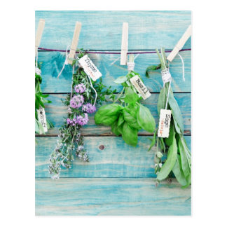 herbals en la pared de madera pintada turquesa del tarjetas postales