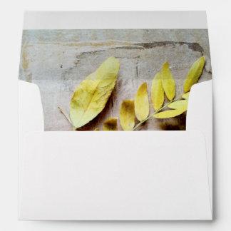 Herbarium V Envelopes