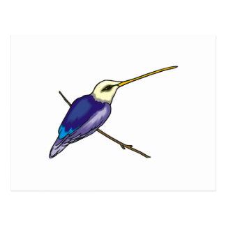 Herbert Hummingbird Postcard