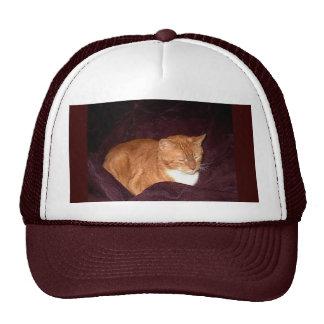 Herbie el gato de la mermelada anaranjada gorras