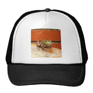 Herbie the Frog Trucker Hat