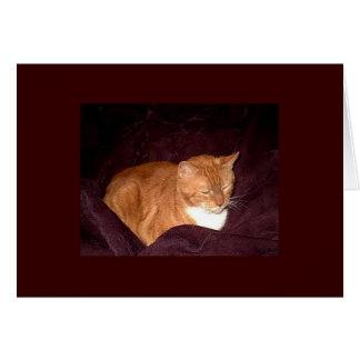 Herbie the Orange Marmalade Cat Card